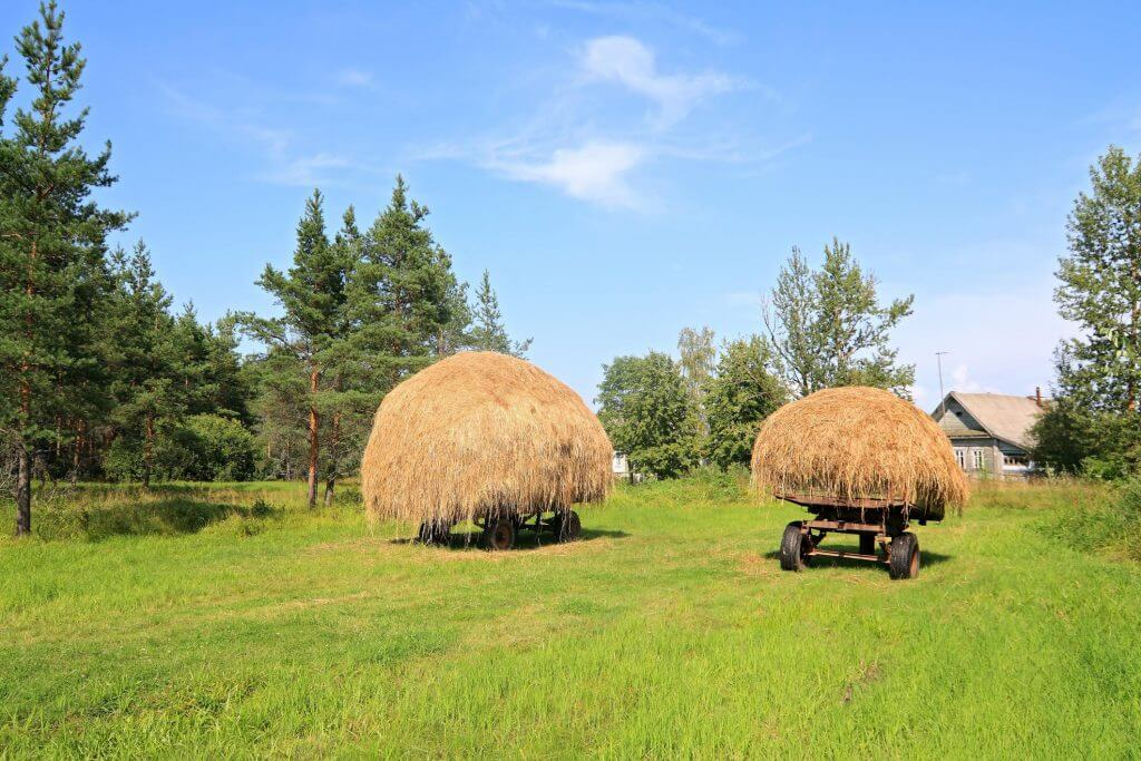 Collecting Pine Straw To Use In Flower Beds For Weed Control