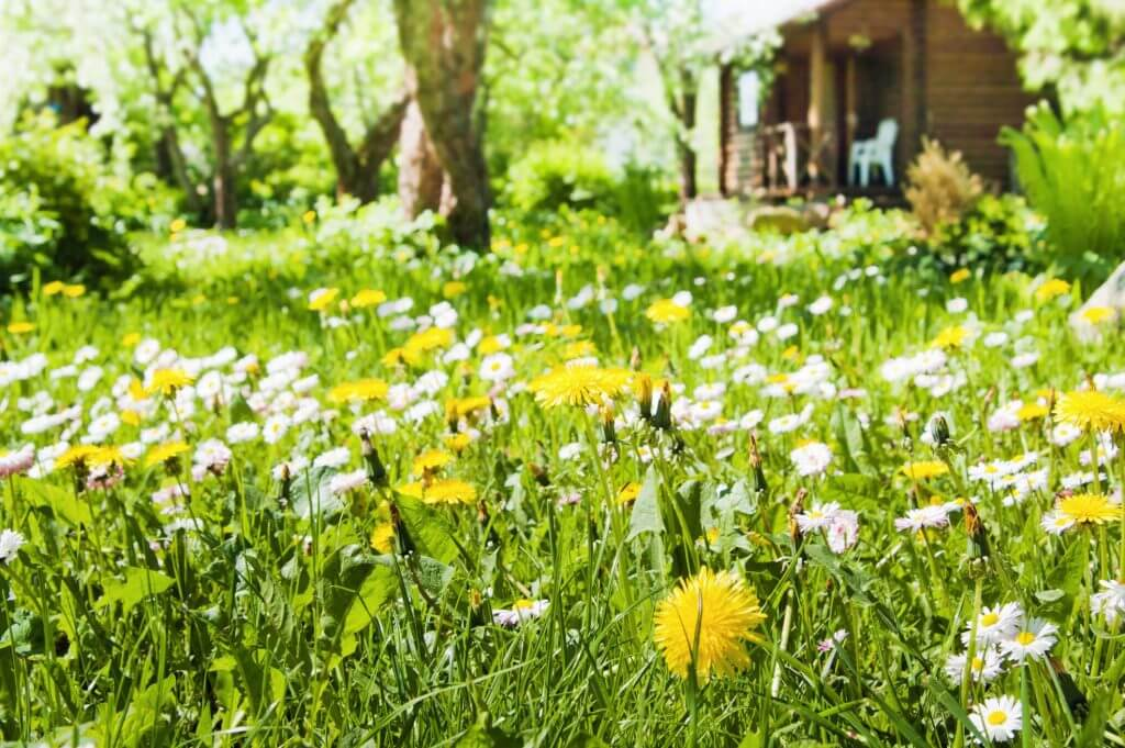 Weed Control Wilmington Nc Contact The Lawn Care Experts