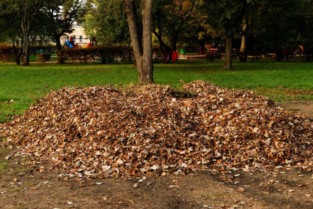 Large Pile Of raked Leaves Ready For Yard Clean Up